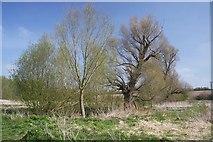 TL8663 : No Man's Meadows by Bob Jones