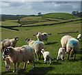 NY6043 : Pasture, Renwick by Andrew Smith