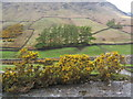 NY1808 : Riverbank gorse and lower slopes of Yewbarrow, Wasdale Head by Andrew Hill