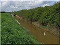 TA0939 : Holderness Drain near Meaux by Paul Harrop
