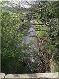SJ7638 : River Tern south of Blackbrook by John M