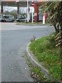 NZ3628 : Rabbit queue for petrol by Gordon Griffiths