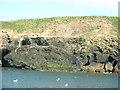 SH1824 : The puffin bank on Ynys Gwylan-fawr by David Medcalf