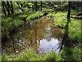 SX3877 : Pool alongside the Tamar by Derek Harper