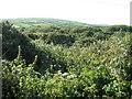 SW4231 : Scrubland near Newbridge by David Medcalf
