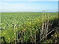SW4331 : Farmland near Tremayne by David Medcalf