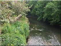 SO8483 : River Stour downstream of Kinver Bridge by John M