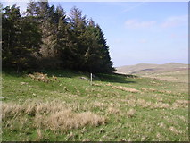 NY5009 : Plantation, Little Mosedale Beck by Michael Graham