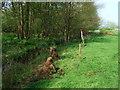SJ7439 : River Tern by John Poyser