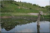 SJ6575 : Anderton Nature Park - the dipping pond by Alan Murray-Rust