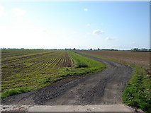 TF4752 : Track Near Bystall Bank by Ian Paterson