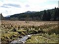 NN2002 : Glen Goil by wfmillar