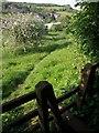 SX9268 : Maidencombe Community Orchard by Derek Harper