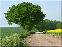 SU5656 : Farm road, Hannington by Andrew Smith