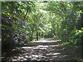 SW6443 : Path from the North Cliff carpark in North Cliff Plantation by Rod Allday