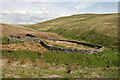 NY4585 : A sheepfold by the Stanygill Burn by Walter Baxter