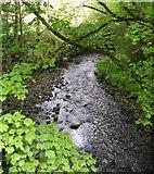 SE0125 : Stream - Cragg Road, Mytholmroyd by Betty Longbottom