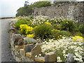 G6244 : Roadside planting at Lissadell by Kay Atherton