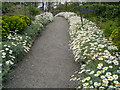 G6244 : A flowery path at Lissadell by Kay Atherton