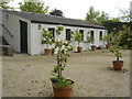 M9380 : Young fruit trees and shed at Strokestown park by Kay Atherton