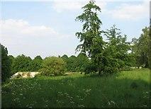 SU6154 : Countryside & Rubble by Sandy B