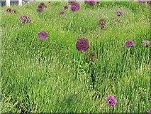 SU1484 : Plant bed, Heelis, Swindon by Brian Robert Marshall