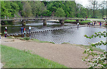 SE0754 : Stepping Stones in the river Wharfe by Peter Church