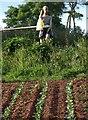 SX8970 : Scarecrow, Haccombe by Derek Harper