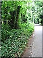 TG0728 : View north along Reepham Road by Evelyn Simak