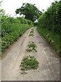 TG0628 : Bray's Lane by Evelyn Simak