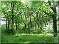 SE1427 : Low Wood, North Bierley by Humphrey Bolton