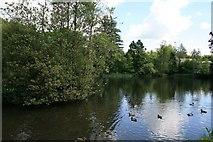 S9440 : The Still, Pond off River Urrin, Enniscorthy by Brian Hodge