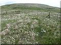 NN8601 : Greenforet Hill to Blairdenon Hill by Chris Wimbush