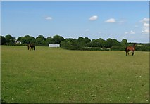 SM9609 : Horses in a field by Colin Bell