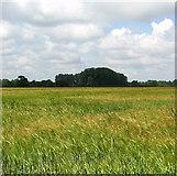 TM0099 : Ripening barley by Evelyn Simak