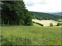 SO3566 : Edge of Birchen Coppice by Peter Whatley