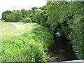 SO8762 : River Salwarpe in summer by Peter Whatley