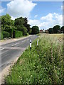 TG2529 : View north along the B1145 (North Walsham Road) by Evelyn Simak