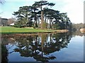 SJ5509 : Cedar Reflections at Attingham by Mike White
