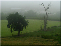 J4681 : Trees in mist near Crawfordsburn by Rossographer