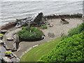 C5937 : Garden beside Lough Foyle by Willie Duffin