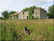 O1371 : Ruined farmhouse at Julianstown, Co. Meath by Kieran Campbell