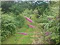 SM8722 : Foxy path by Deborah Tilley