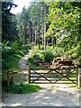 SX1060 : Woods from the road to Loswithiel by Tessa Shepperson