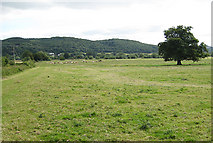 SO5635 : Pasture by the River Wye by Pauline E