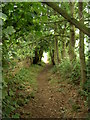SJ3175 : Bridleway between Haddon Wood and Burton by David Quinn