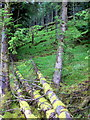 G9585 : Forest on east side of Banagher Hill by louise price