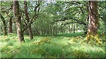NM8464 : Airigh Fhionndail by Richard Webb