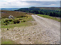 NZ6200 : Towards Bloworth Wood by Peter Church