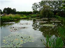 SJ6651 : Lily Pond by Gerald England